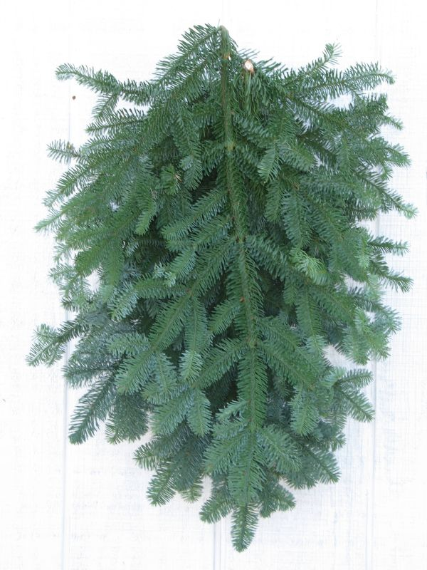 Noble Fir Boughs The Cottage Gardens Inc
