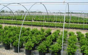 perryplants1-websize