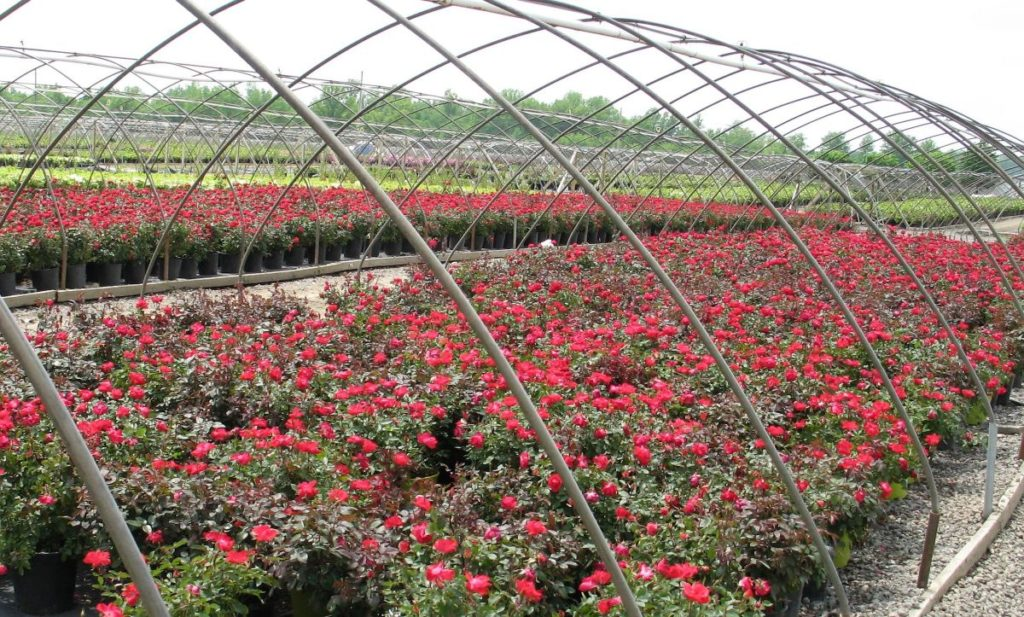 90 Of Our Plants Are Propagated On Site All From Cuttings